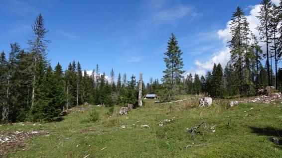 Couvert sur le pâturage de la Baragne - Vaud - Suisse