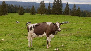 Grands Plats de Bise - Le Chenit - Vaud - Suisse