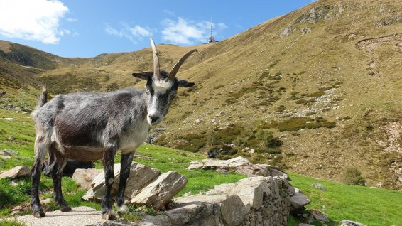 Alpe Duragno - Mezzovico-Vira - Tessin - Suisse