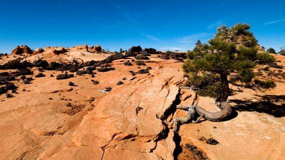 Black Rocks - Canaan Mountain - Utah - Etats-Unis
