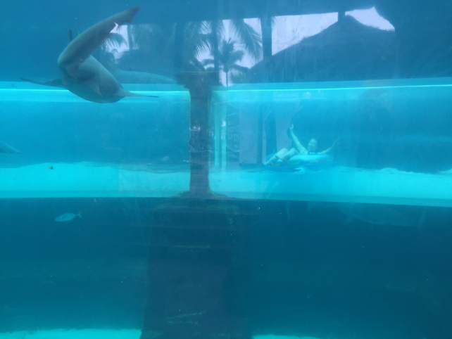"Serpent Slide goes through the shark tank - ""The Secrets of Atlantis in the Bahamas"" - Two Traveling Texans"