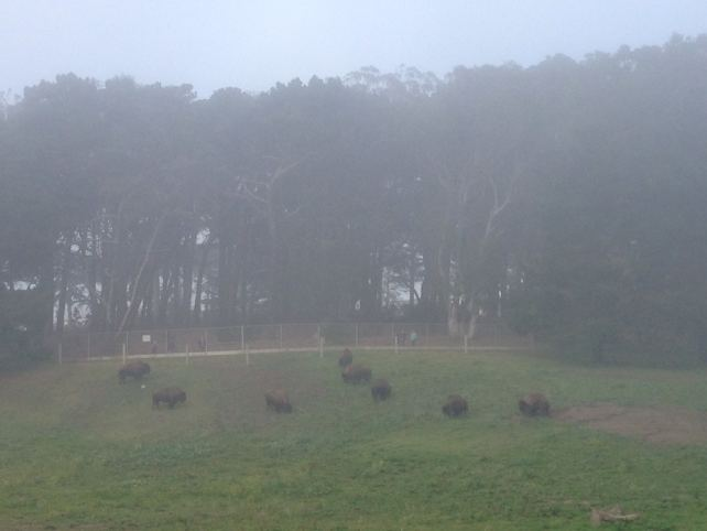 """Buffalo on a foggy day in Golden Gate Park. - """"Golden Gate Park - """"More than Your Average Greenspace"""" - Two Traveling Texans"""