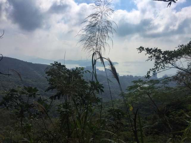 """Some places you forget you are in the middle of Hong Kong. - """"Don't Miss Victoria Peak When Visiting Hong Kong"""" - Two Traveling Texans"""