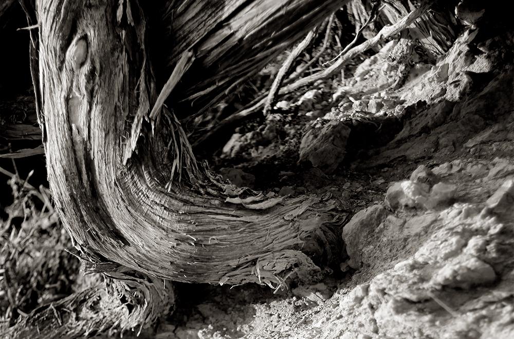 Si observas las raíces secas te conviertes en hormiga