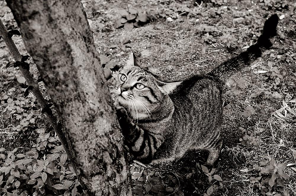 Una gata, unas uñas, un árbol.