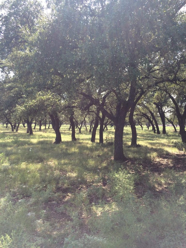 Fox Ranch Texas Ranches For Sale Texas Ranch Brokers