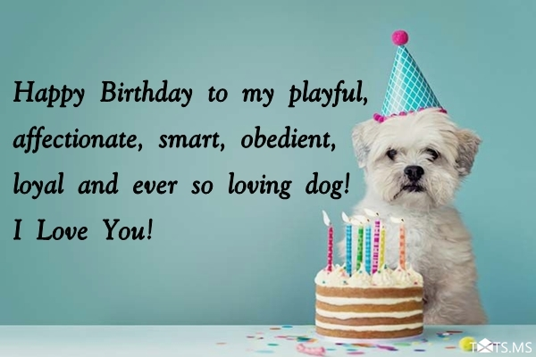 Birthday Wishes For Dogs Messages Quotes Images Pictures Photos Txts Ms
