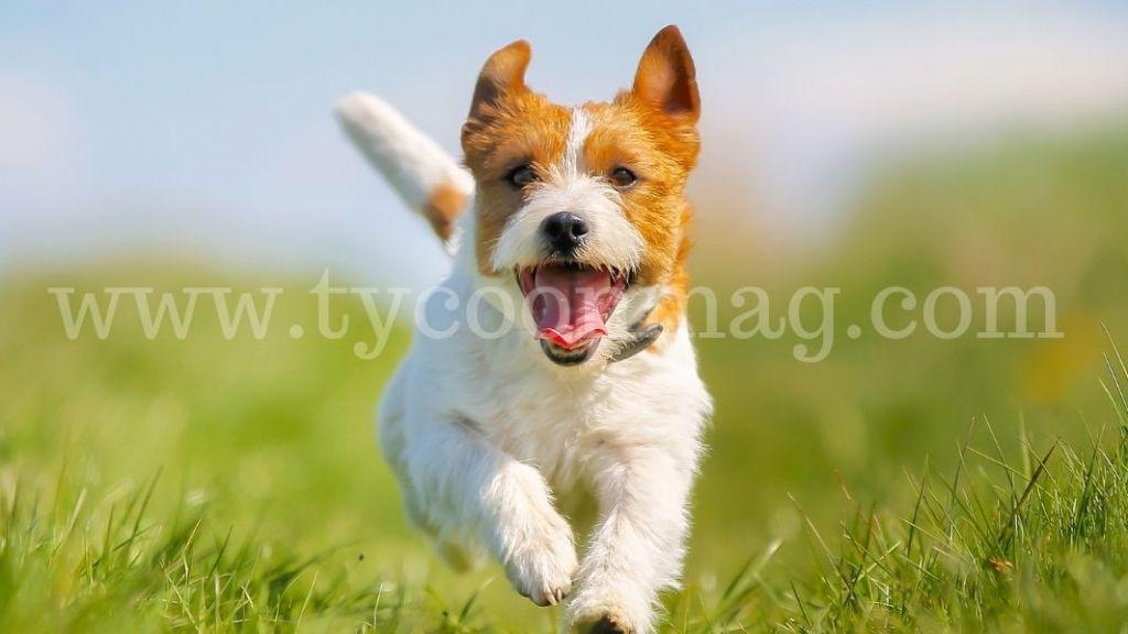 sell dog photos