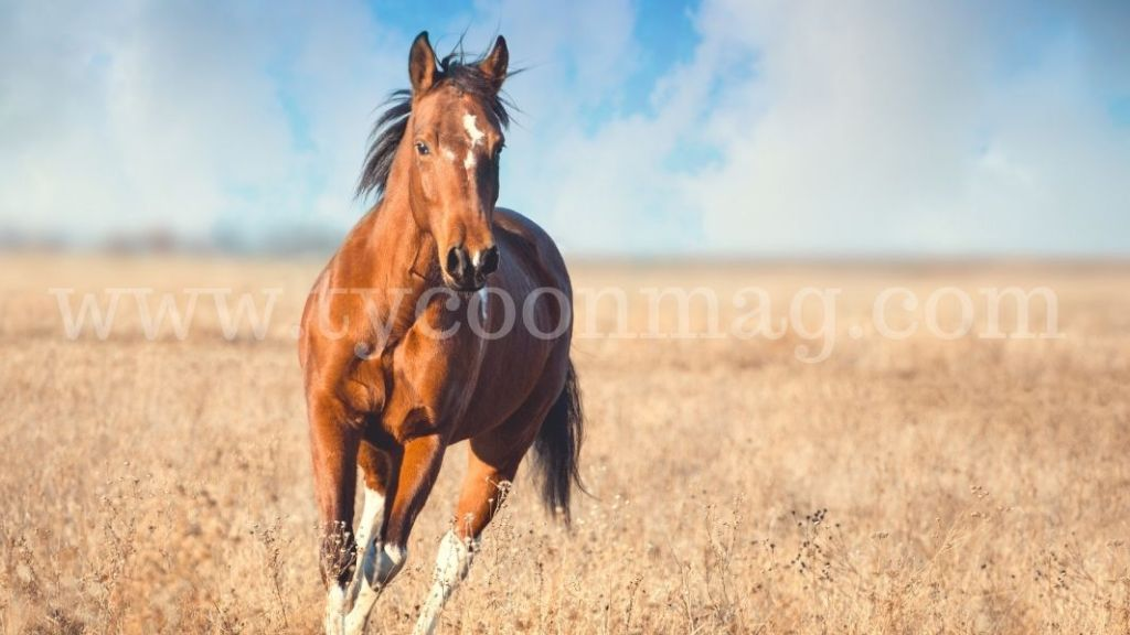 picture of a horse running