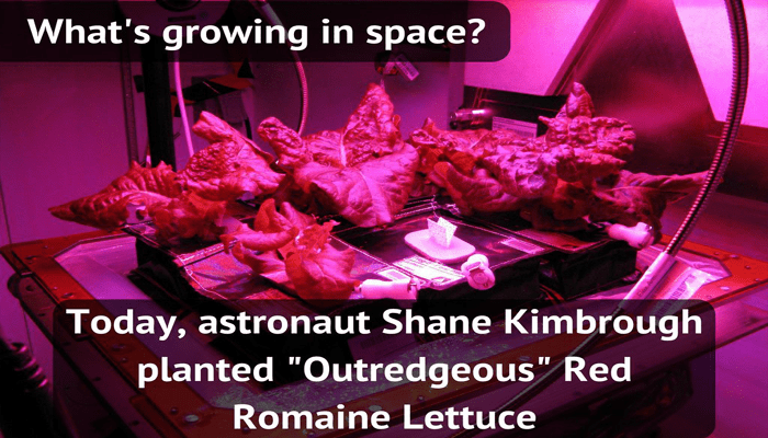 Nasa growing lettuce in space