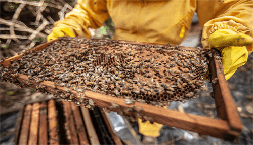 The Financial Advantages of a Beekeeping Business