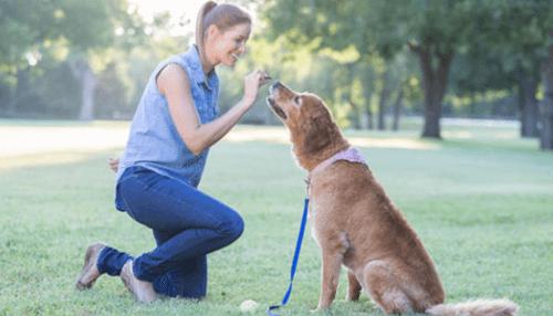 Giving Dog Treats as a Form of Reward
