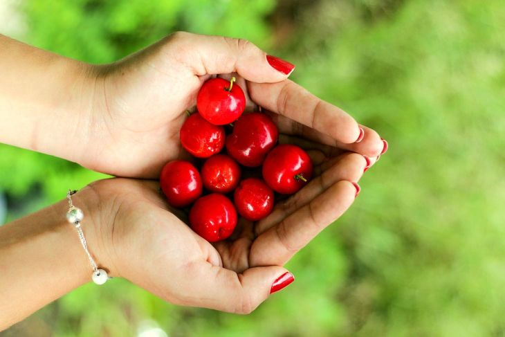 Holding red cherries | High Alkaline Foods To Add To Your Diet