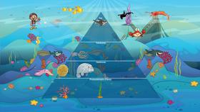 Ocean Ecological Pyramid
