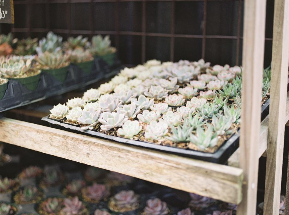 a tray of succulents outside of Stable Cafe in San Francisco