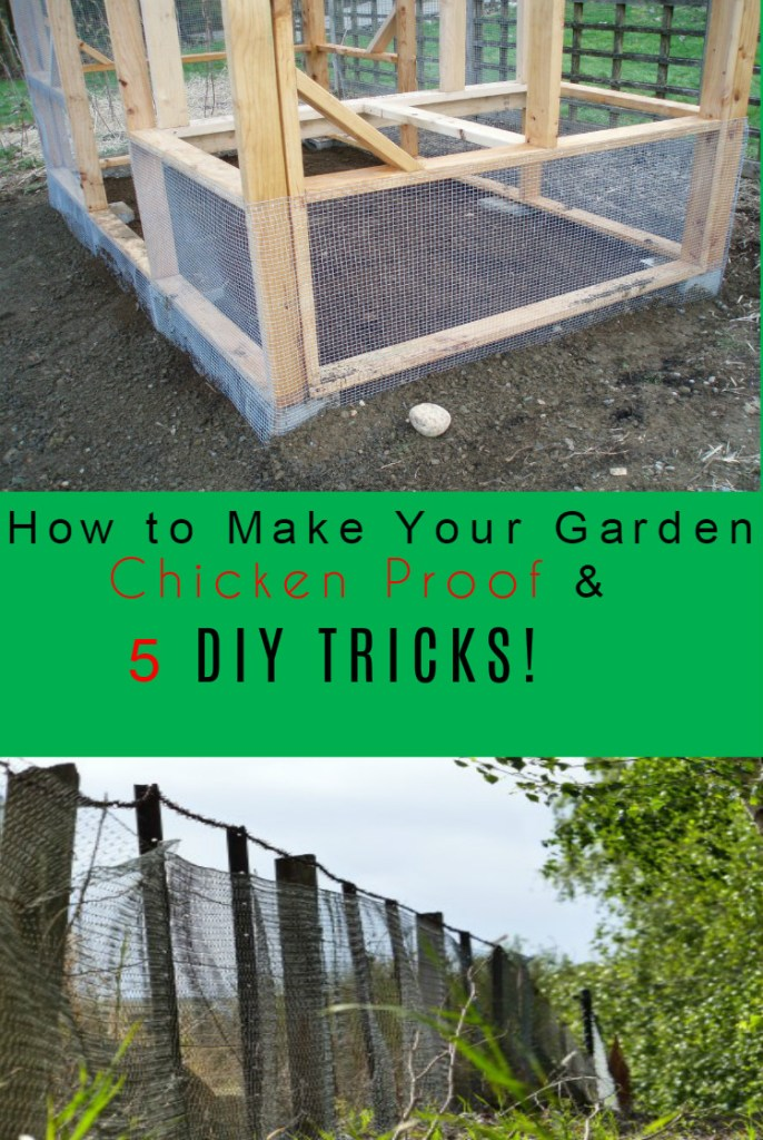 How to Make Your Garden Chicken Proof & 5 DIY TRICKS!