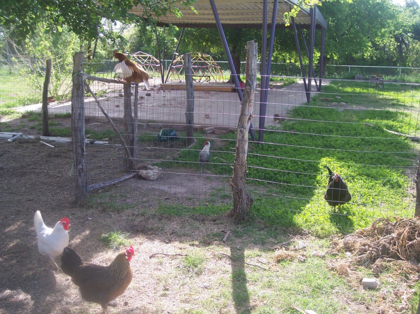 position of your chicken coop
