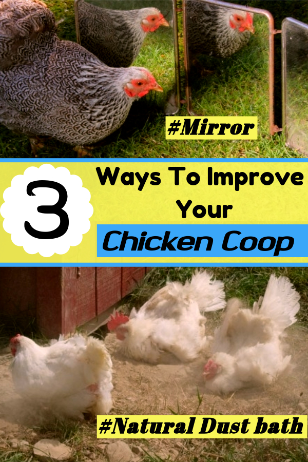 3 Ways to Improve Your Chicken Coop – DIY Projects!