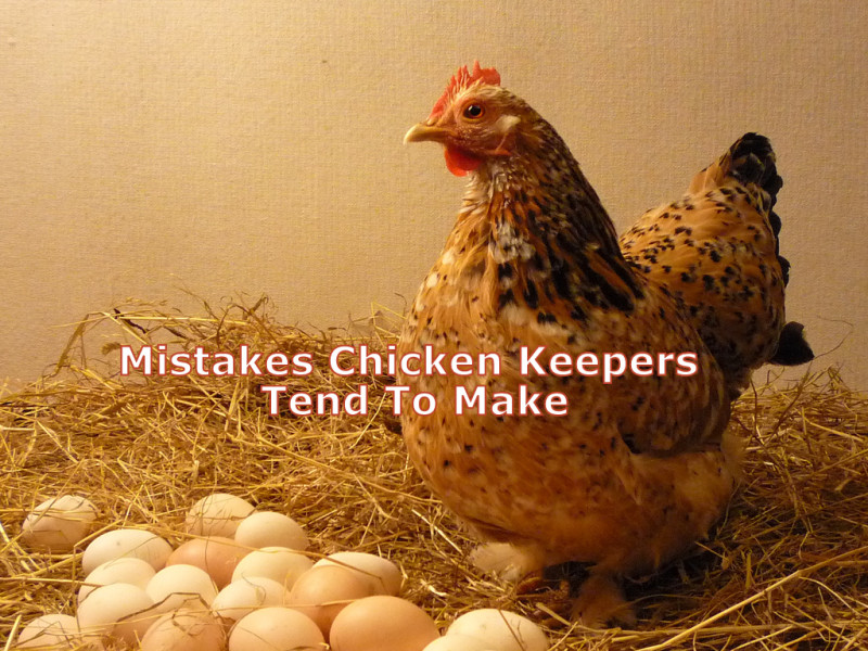 5 Mistakes Chicken Keepers Tend To Make