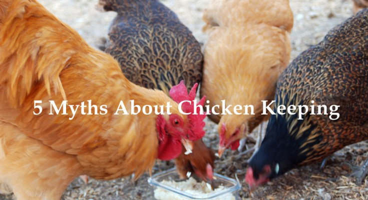 5 Myths About Chicken Keeping