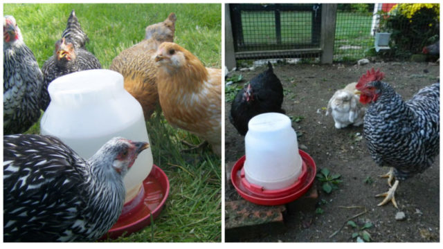 How To Maintain Your Waterer