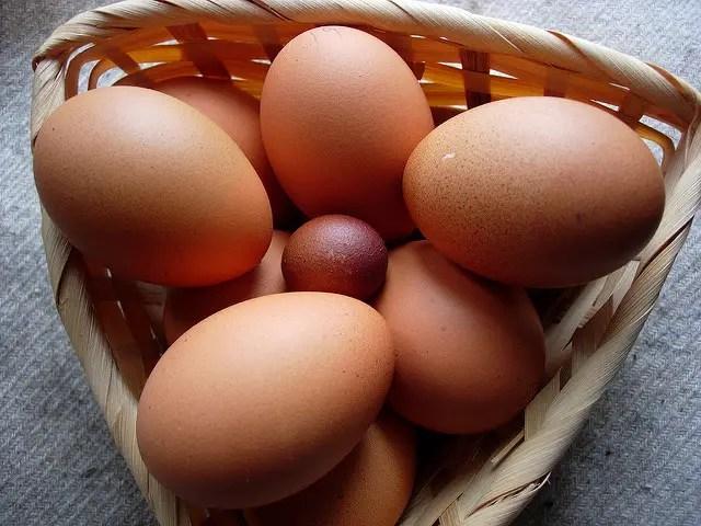 Misshaped & Soft-Shelled Eggs