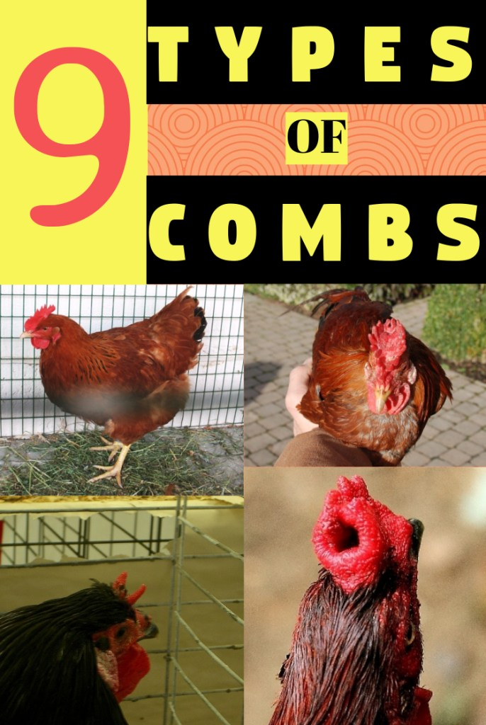 types of combs in chickens
