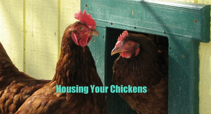 Housing Your Chickens