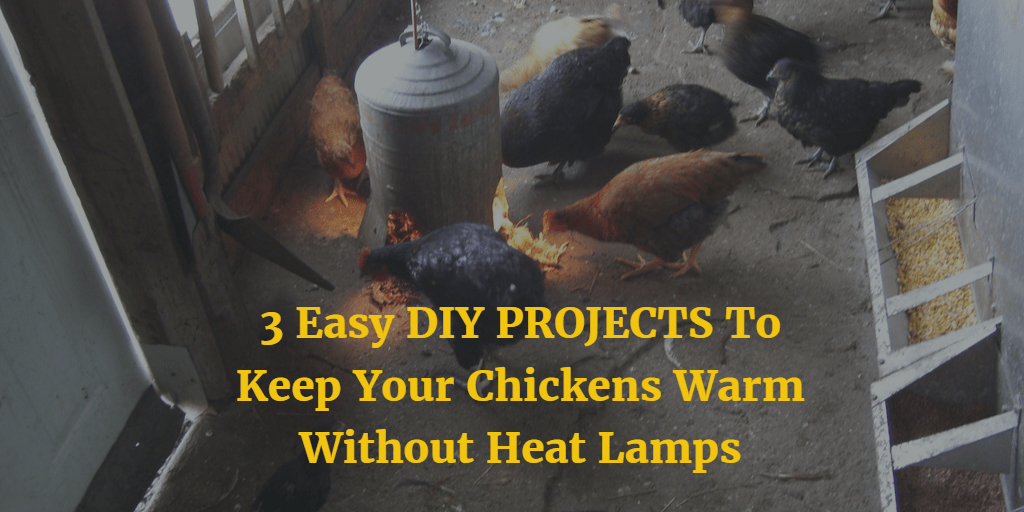 3 Easy Diy Projects To Keep Your Chickens Warm Without Heat Lamps Types Of Chicken