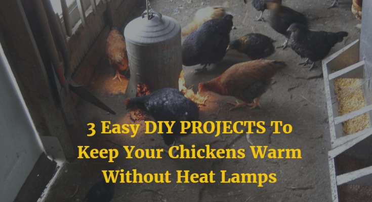 Keeping Your Chickens Without Heat Lamps