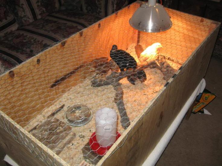 How To Build Your Own Chicken Brooder!