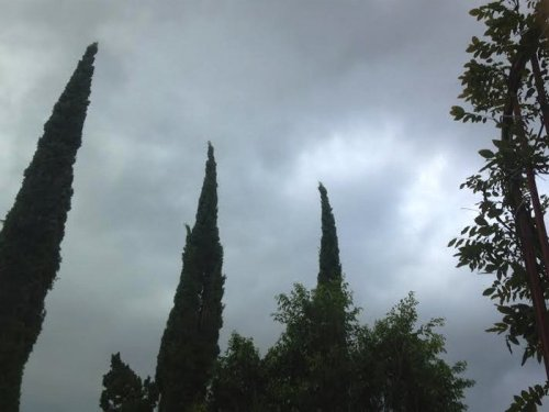 Photograph of a cloudy sky in Los Angeles, trees, vines, the hint of a spiraling staircase. Winter in Los Angeles.
