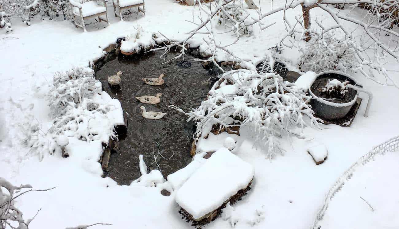 Homemade Garden Ponds