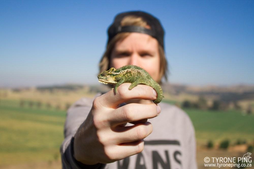 Bradypodium thamnobates | Natal Midlands Dwarf Chameleon | Tyrone Ping