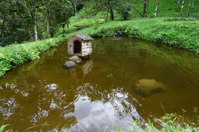 Tilapia Pond and Duck House