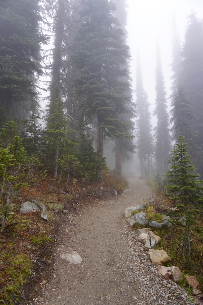 The Hiking trail on top of Mt Revelstoke