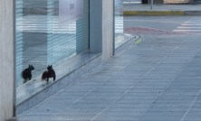 An inquisitive squirrel takes advantage of the deserted streets of Moraira on New Year's day to go window shopping (and discover its own reflection in the process)