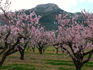 Blossom view