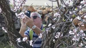 Healthy Walking Parcent – Blossom Walk @ Parcent – Blossom Walk