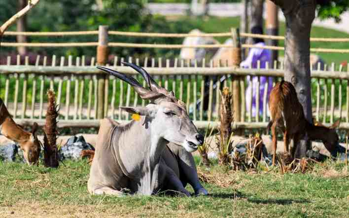 حديقة الحيوانات في دبي أسرار وتفاصيل رائعة عليك معرفتها | مجلة سيدات الامارات