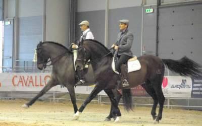 Cavalli a Roma 2015 –  Foto da bordo ring