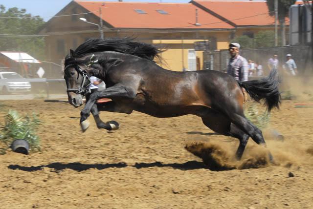 Cavalli sotto il vulcano 2015