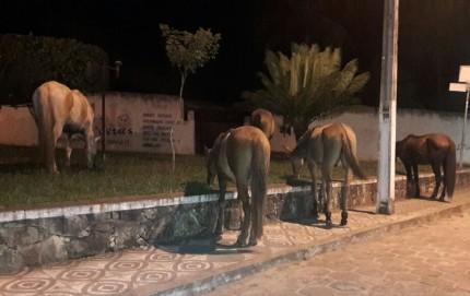 Animais pastam próximo à sede da Prefeitura (Foto: Internauta/Ubatã Notícias)