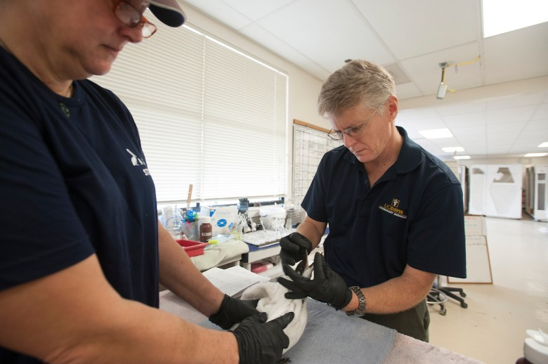 Two wildlife veterinarians treat an oil-affected bird
