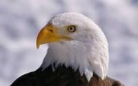 cap de vultur intrebator