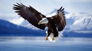 vultur in munte
