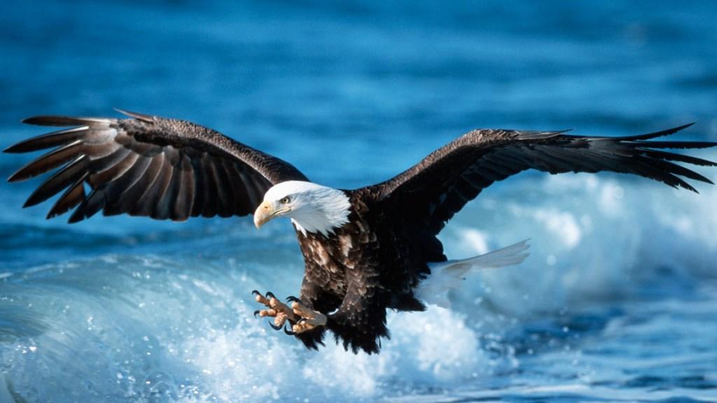 vultur2