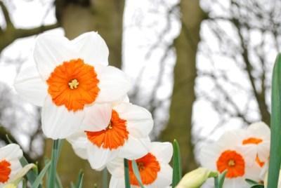 bloom-283020_960_720