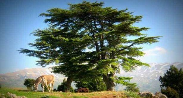 الليونز الدولية 351 أطلقت مسابقة تصوير فوتوغرافي في محمية أرز الشوف عين زحلتا