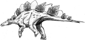 Stegosaurus reconstruction